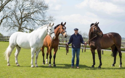 5 Hunting Horses Near Banbury